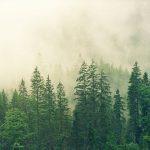 Is An Arborist Report Worth The Money?