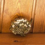 Some Guarantees That You Should Look Out For When You Are Looking To Find Someone That Works As A Wasp Exterminator