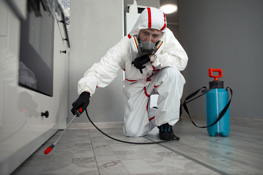 wasp exterminator in protective suit disinfects the house